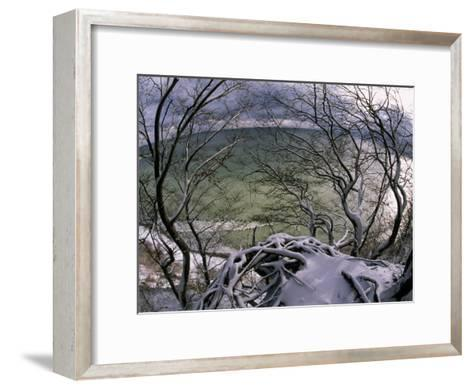 View of the Water Through Snow-Draped Beech Tree Branches and Roots-Norbert Rosing-Framed Art Print