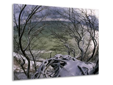 View of the Water Through Snow-Draped Beech Tree Branches and Roots-Norbert Rosing-Metal Print