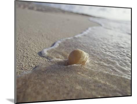 Waves Approach an Endangered Green Sea Turtle Egg Exposed on a Beach-Jason Edwards-Mounted Photographic Print