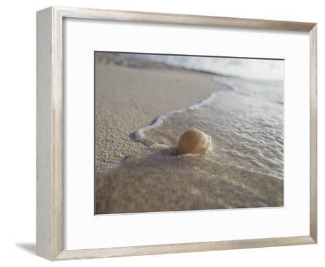 Waves Approach an Endangered Green Sea Turtle Egg Exposed on a Beach-Jason Edwards-Framed Art Print