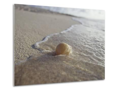 Waves Approach an Endangered Green Sea Turtle Egg Exposed on a Beach-Jason Edwards-Metal Print