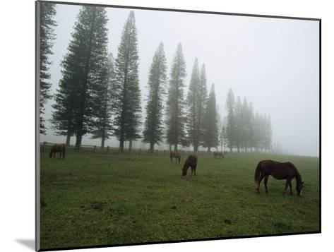 Horses Graze in Fog Near a Stand of Norfolk Island Pine Trees-Paul Chesley-Mounted Photographic Print