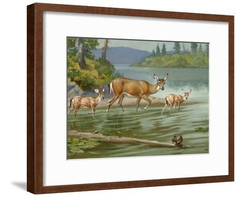 Doe and Her Fawns Walk Cautiously into the Water-Walter Weber-Framed Art Print