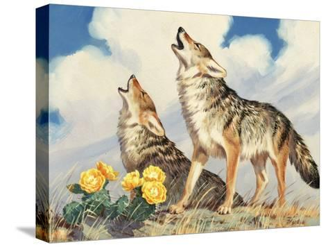 Coyotes Howl to the Setting Sun-Walter Weber-Stretched Canvas Print