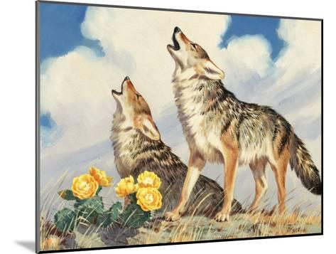 Coyotes Howl to the Setting Sun-Walter Weber-Mounted Photographic Print