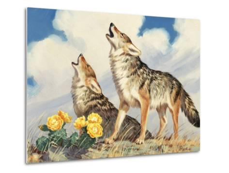 Coyotes Howl to the Setting Sun-Walter Weber-Metal Print