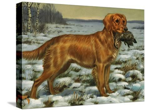 Golden Retriever Holds a Dead Bird in its Mouth-Walter Weber-Stretched Canvas Print