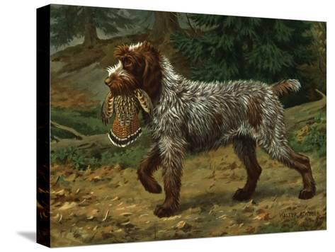 Wire-Haired Pointing Griffon Holds a Dead Bird in its Mouth-Walter Weber-Stretched Canvas Print