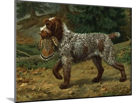 Wire-Haired Pointing Griffon Holds a Dead Bird in its Mouth-Walter Weber-Mounted Photographic Print