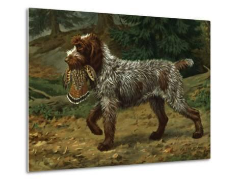 Wire-Haired Pointing Griffon Holds a Dead Bird in its Mouth-Walter Weber-Metal Print