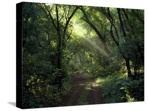 Rays of Sunlight Pass Through a Forest Canopy over a Trail-Jason Edwards-Stretched Canvas Print