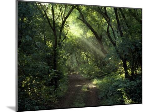 Rays of Sunlight Pass Through a Forest Canopy over a Trail-Jason Edwards-Mounted Photographic Print