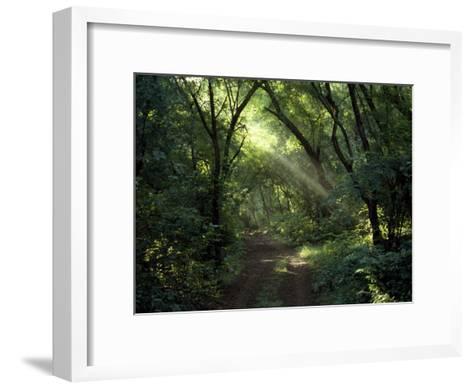 Rays of Sunlight Pass Through a Forest Canopy over a Trail-Jason Edwards-Framed Art Print