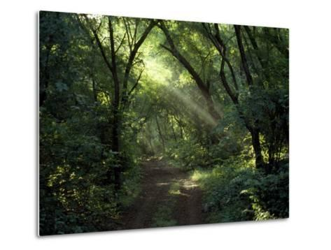 Rays of Sunlight Pass Through a Forest Canopy over a Trail-Jason Edwards-Metal Print