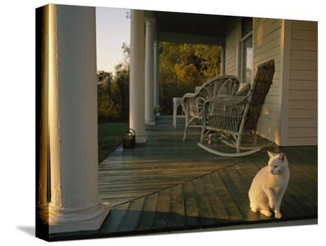 White Cat in Sunlight on a Columned Porch of a Historic Farmhouse-Joel Sartore-Stretched Canvas Print