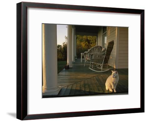 White Cat in Sunlight on a Columned Porch of a Historic Farmhouse-Joel Sartore-Framed Art Print