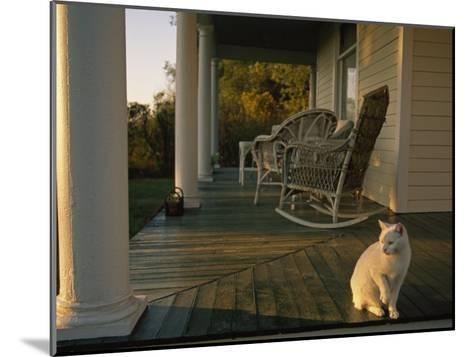 White Cat in Sunlight on a Columned Porch of a Historic Farmhouse-Joel Sartore-Mounted Photographic Print