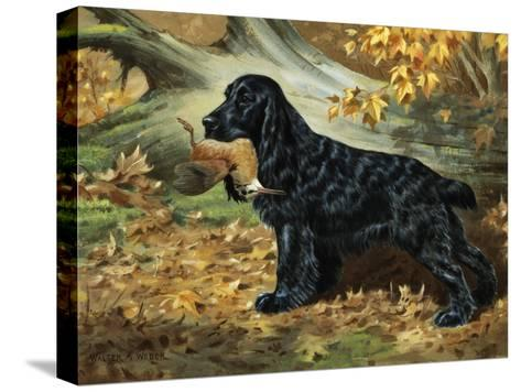 Portrait of English Cocker Spaniel Holding a Bird in its Jaws-Walter Weber-Stretched Canvas Print