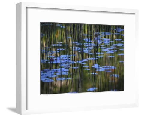 Leaves and Reflections of Fall Foliage and Grasses in the Tarn-Michael Melford-Framed Art Print