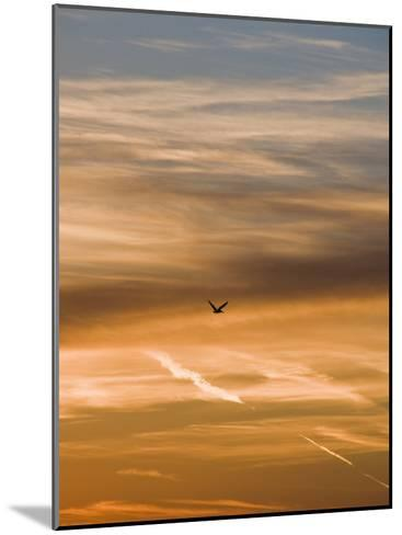 Silhouetted Pelican Flies Toward Sunset-James Forte-Mounted Photographic Print
