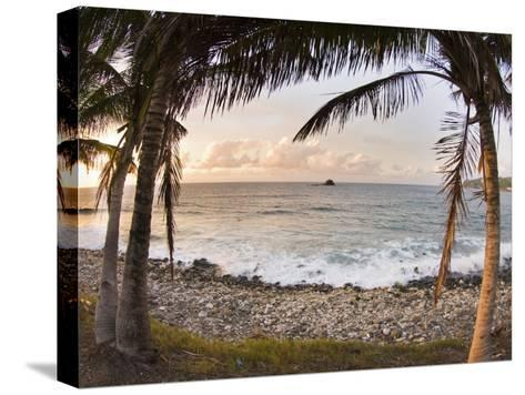 Sunset Framed by Palm Trees on a Rocky Beach-James Forte-Stretched Canvas Print