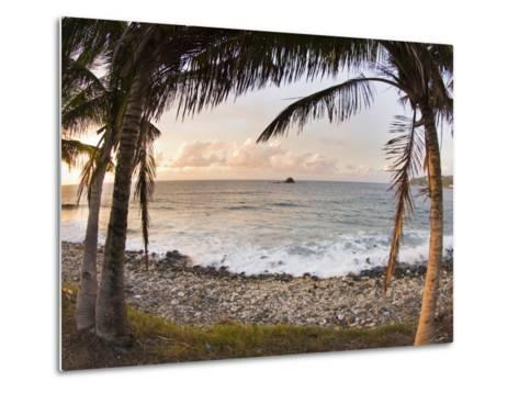 Sunset Framed by Palm Trees on a Rocky Beach-James Forte-Metal Print