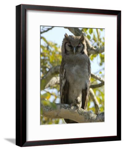 Verreaux's Eagle Owl, Bubo Lacteus, or Milky Eagle Owl, in a Tree-Paul Sutherland-Framed Art Print