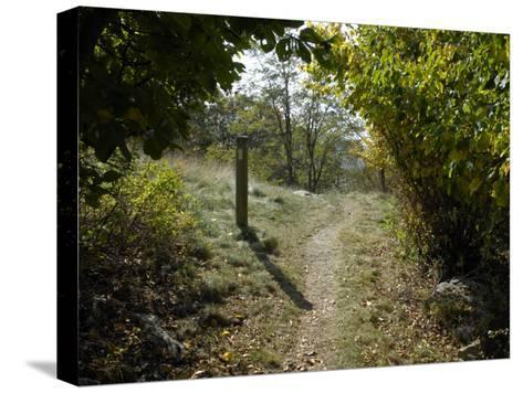 Marker Post Beside the Appalachian Trail Framed by Foliage-Scott Sroka-Stretched Canvas Print