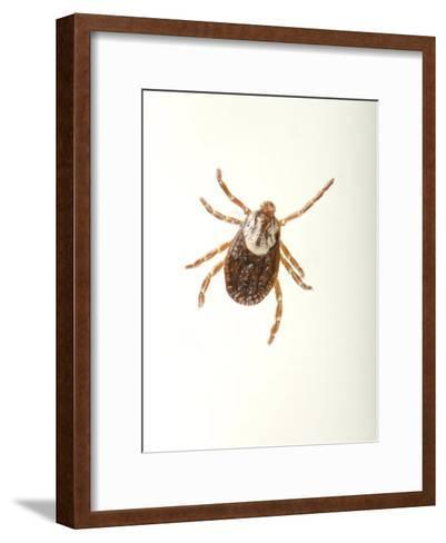 American Dog Tick, Dermacentor Variabilis-Joel Sartore-Framed Art Print