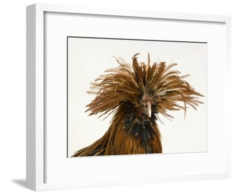 Golden Polish Chicken-Joel Sartore-Framed Art Print