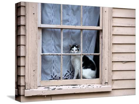 Black and White Cat Looking Out the Window of an Historic Home-Todd Gipstein-Stretched Canvas Print