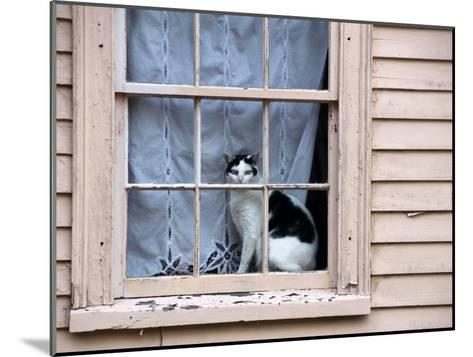 Black and White Cat Looking Out the Window of an Historic Home-Todd Gipstein-Mounted Photographic Print