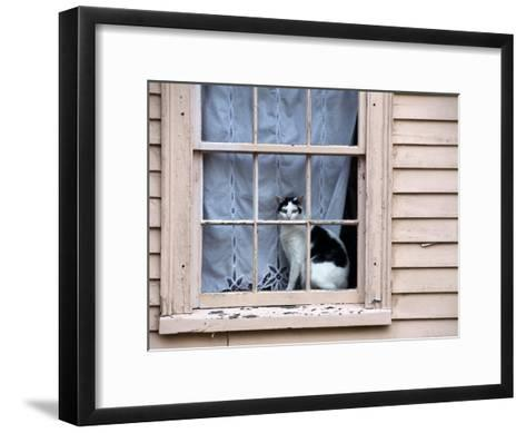 Black and White Cat Looking Out the Window of an Historic Home-Todd Gipstein-Framed Art Print