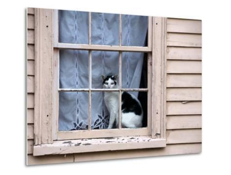 Black and White Cat Looking Out the Window of an Historic Home-Todd Gipstein-Metal Print