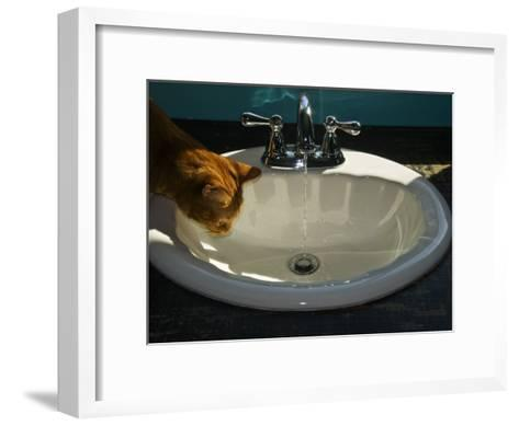 Orange Tabby Cat Watching Water Flow into a Bathroom Sink-Todd Gipstein-Framed Art Print