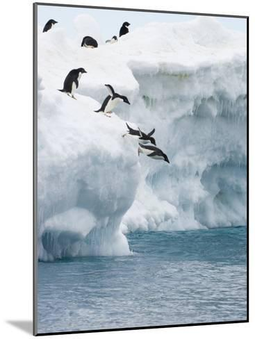 Adelie Penguins Lined Up to Jump from an Iceberg into Chilly Waters-Tom Murphy-Mounted Photographic Print