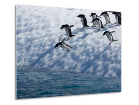 Adelie Penguins Lined Up to Jump from an Iceberg into Chilly Waters-Tom Murphy-Metal Print