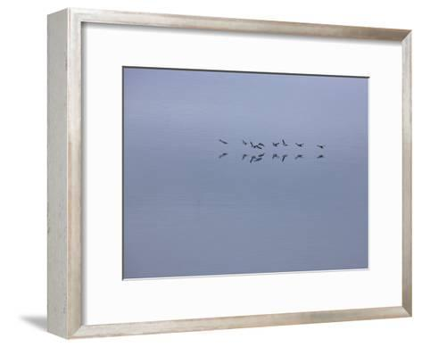 Flying Birds and Reflections-Michael Melford-Framed Art Print