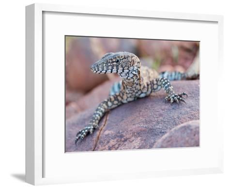 Perentie Monitor Lizard Basking on Rock in Outback Australia-Brooke Whatnall-Framed Art Print