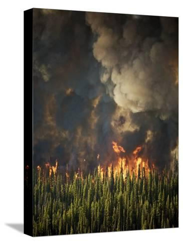 Aerial View of Forest Fires in the Boise National Forest-Mark Thiessen-Stretched Canvas Print