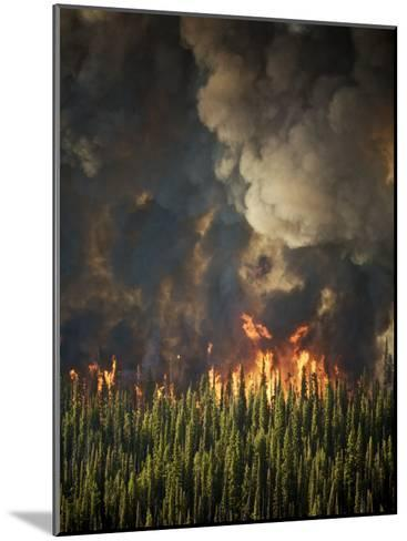 Aerial View of Forest Fires in the Boise National Forest-Mark Thiessen-Mounted Photographic Print