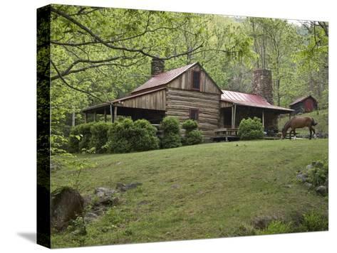 Horse Grazing in the Yard of a Mountain Log Cabin-Greg Dale-Stretched Canvas Print