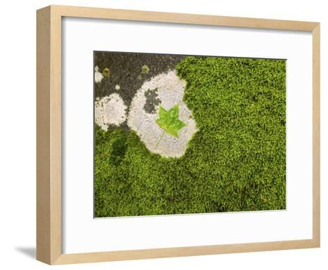 Maple Leaf and Moss-Michael Melford-Framed Art Print