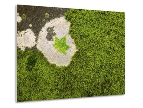 Maple Leaf and Moss-Michael Melford-Metal Print