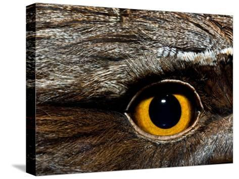 Abstract Image of the Eye and Feathers of a Tawny Frogmouth-Brooke Whatnall-Stretched Canvas Print