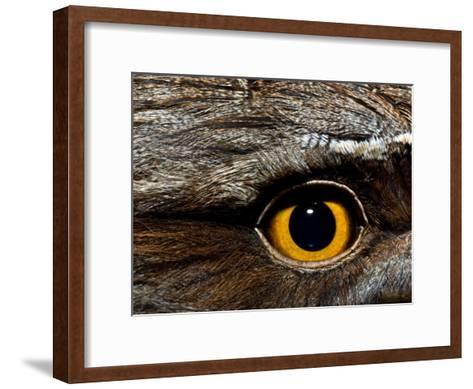 Abstract Image of the Eye and Feathers of a Tawny Frogmouth-Brooke Whatnall-Framed Art Print
