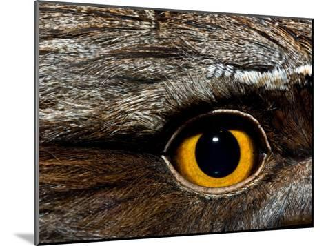 Abstract Image of the Eye and Feathers of a Tawny Frogmouth-Brooke Whatnall-Mounted Photographic Print