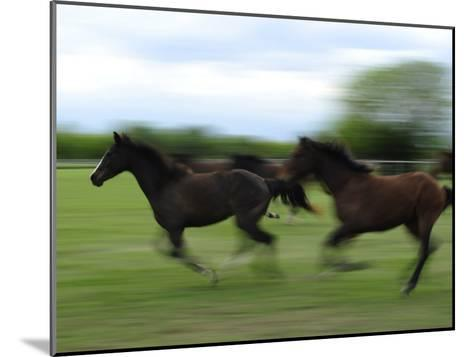Galloping Horses at a Ranch-Raul Touzon-Mounted Photographic Print