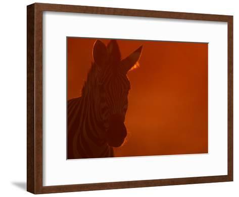 Portrait of a Zebra (Equus Burchelli)-Beverly Joubert-Framed Art Print