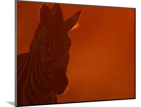 Portrait of a Zebra (Equus Burchelli)-Beverly Joubert-Mounted Photographic Print